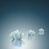Lotus - fondo de la pureza stock de ilustración