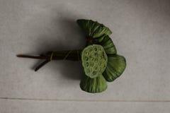 Lotus frö på en manhand Arkivfoto