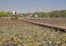 Lotus Garden Fotografia Stock