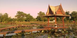 Lotus Garden stock fotografie