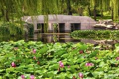 Lotus Garden Reflection Bridge Summer slottPeking Kina Arkivbild