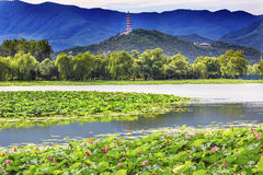Lotus Garden Reflection Summer Palace Pekín China fotografía de archivo libre de regalías