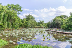 Lotus-Gartenlandschaft mit Gehweg lizenzfreie stockfotografie