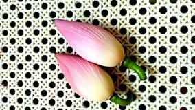 Lotus germoglia i fiori Fotografia Stock