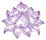 Lotus in hand-drawn style Royalty Free Stock Image