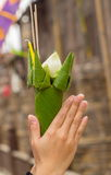 Lotus in hands. Close up Royalty Free Stock Photos