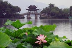 Lotus in het meer van het Westen, Hangzhou stock foto's