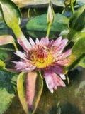 Lotus-het schilderen Stock Afbeelding