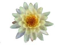 Lotus-het schilderen Royalty-vrije Stock Afbeeldingen