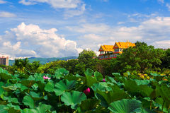 The lotus_house_landscape Royalty Free Stock Photos