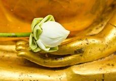 Lotus i den handbuddha statyn Arkivbild