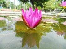 Lotus i naturträsk, tappningstil Royaltyfria Foton