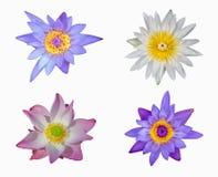 Lotus isolat på vit bakgrund Fotografering för Bildbyråer