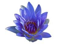 Lotus isolated on white background Royalty Free Stock Photo