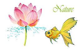 Lotus isolated on white. Watercolor illustration for design Stock Photos