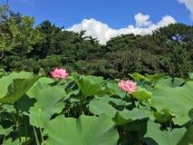 LOTUS JAPAN 1 Royaltyfri Foto