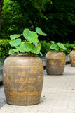 Lotus in jar Stock Photo
