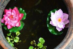 Lotus jar Stock Images