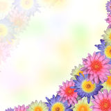 Lotus-kaderachtergrond Stock Foto's