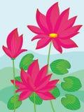 Lotus krajobraz Zdjęcie Royalty Free