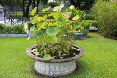 Lotus kruka, smäll PA-i slott i Thailand Arkivfoto
