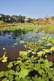 Lotus Lagoon and pavilion Stock Image
