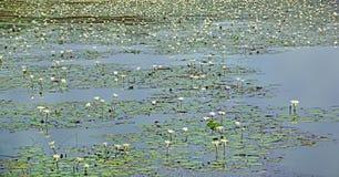 Lotus Lake Stock Photo