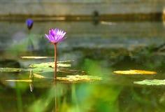 Lotus in Lake of Huyen Khong Son Thuong Pagoda. Hoa sen chùa Huyền Không Sơn Thượng stock photo