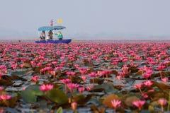 Lotus. Lake lagoon marsh flower travel UdonThaniProvince Thailand background stock photo