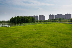 Lotus lake park scenery Royalty Free Stock Photography