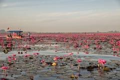 Lotus Lake rouge chez Han Kumphawapi dans Udonthani, Thaïlande images stock