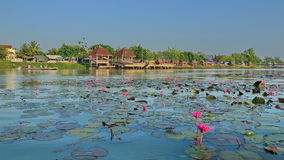 Lotus lake. See if large lotus lake, the picture is only one percent Stock Images