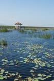 Lotus lake in Thailand Stock Images