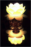 Lotus Lamp Stock Photo