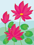 Lotus Landscape Royalty Free Stock Photo