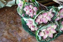 Lotus lantgård royaltyfria bilder