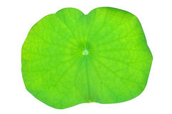 Lotus leaf Stock Photos