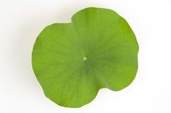 Lotus Leaf Immagini Stock