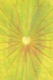 Lotus Leaf fotos de stock