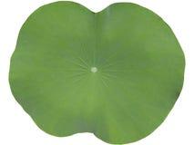Lotus Leaf Image stock