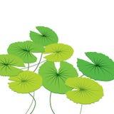 Lotus Leaf Stock Fotografie