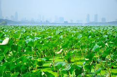 Lotus leaf and city Stock Photo
