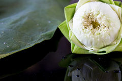 Lotus on leaf Stock Images