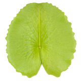 Lotus leaf isolate royalty free stock photos