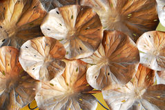 Lotus leaf surface. Background with brond colour Royalty Free Stock Images