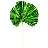 Lotus leaf on white background Stock Photo