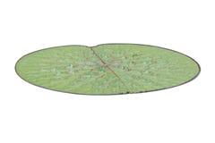 Lotus leaf Royalty Free Stock Photo