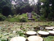 Lotus Leaves stock foto's