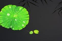 Lotus leaves Stock Image