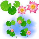 Lotus with leaves Royalty Free Stock Photo